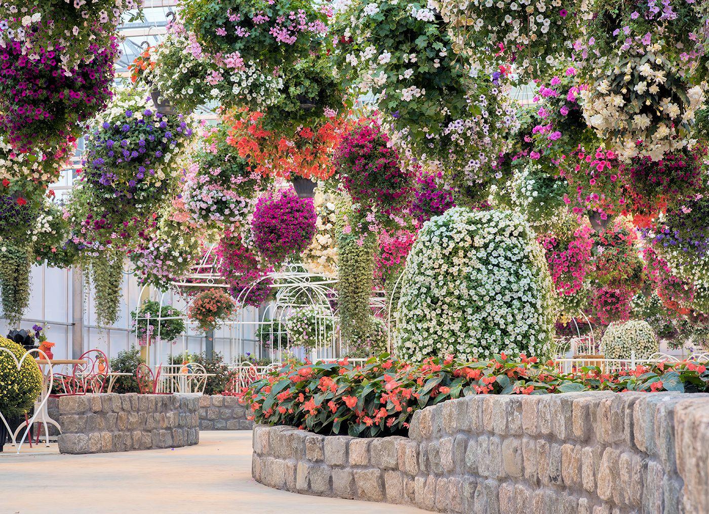 Tropisch paradijs: Orchideeën Hoeve!