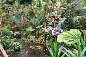 Koikarpers Orchideeën Hoeve