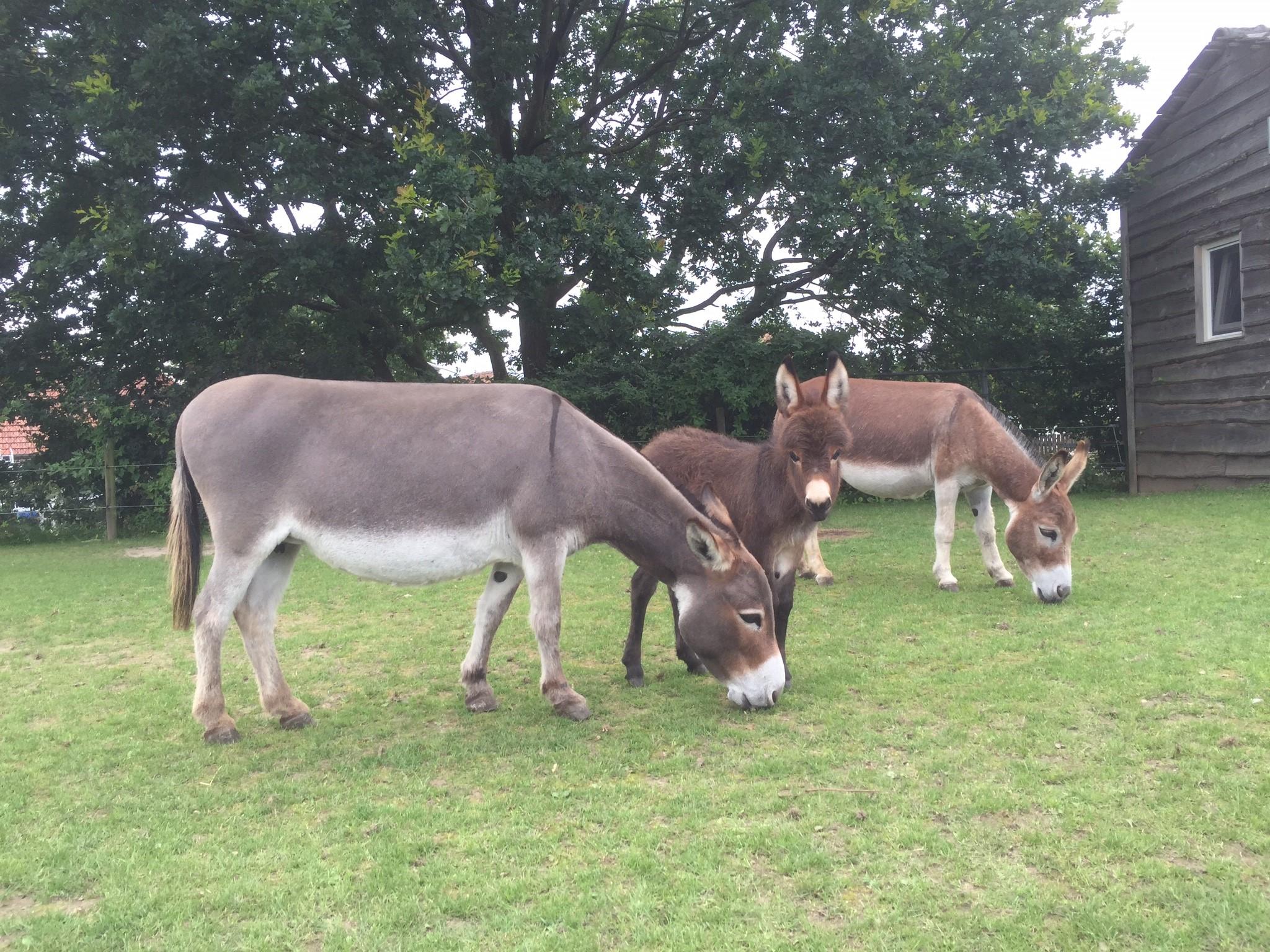 Overnachting tussen ezels!
