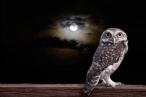 Moonlight uilen workshop