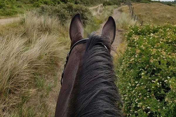 Paardrijden duinen
