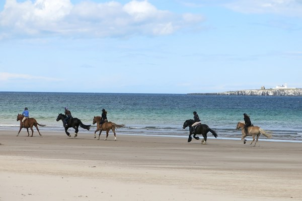 Galop over het strand
