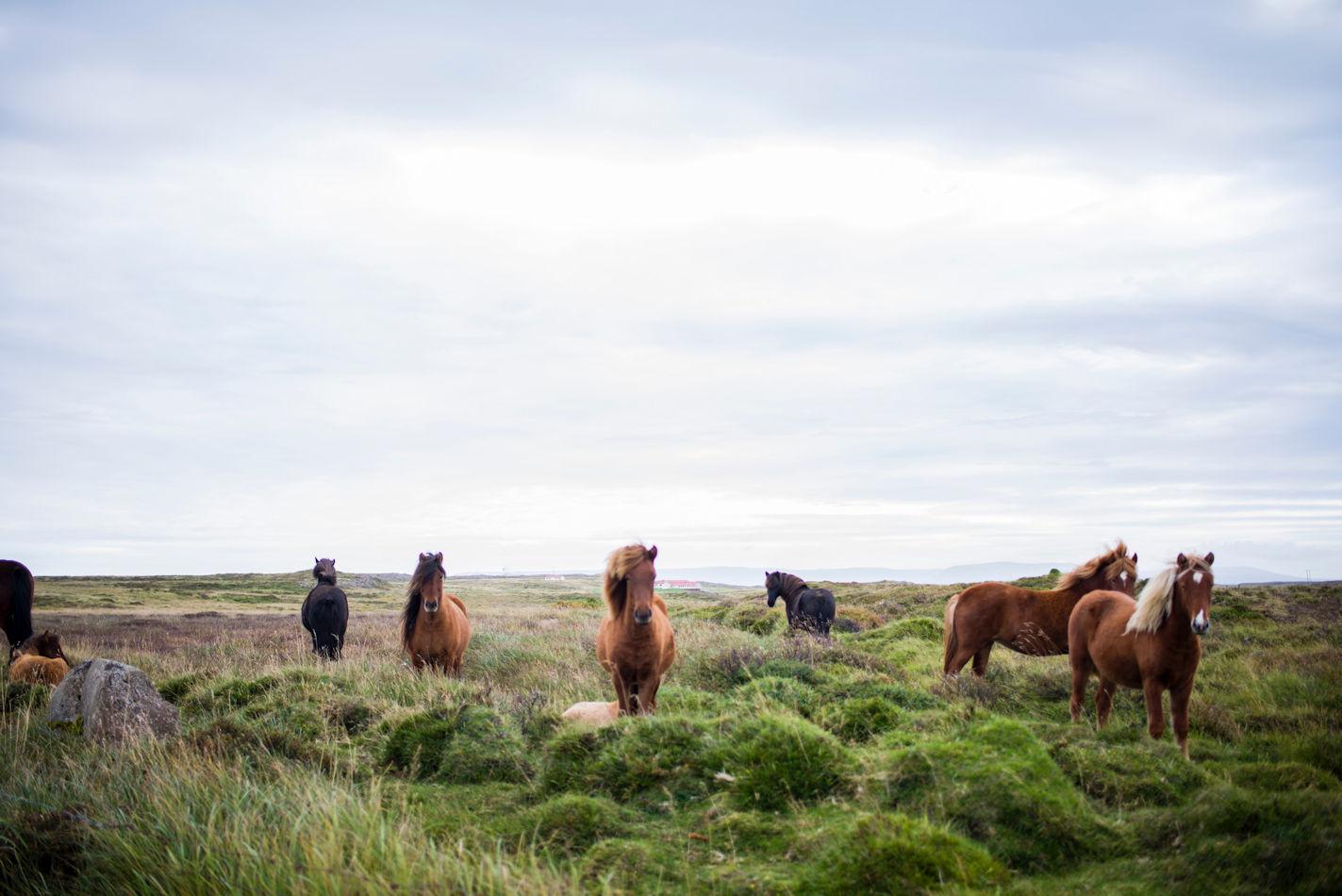 Ervaar het ontspannen gevoel van paardrijden!