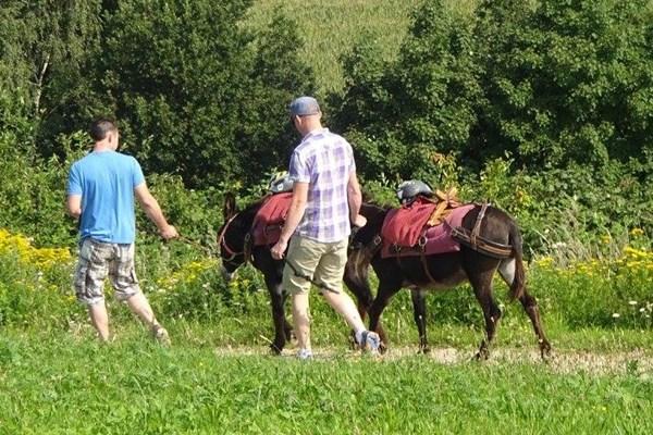 Wandelen met ezel