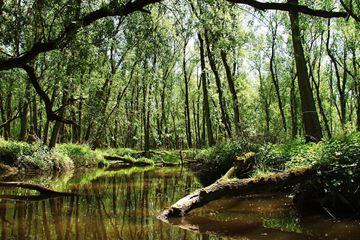 Natuur Biesbosch