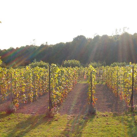 Wijngaard El Placer