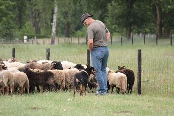 Instructie workshop schapendrijven