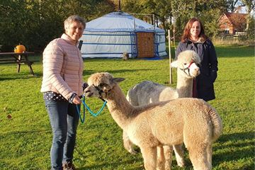Meet & greet met alpaca's