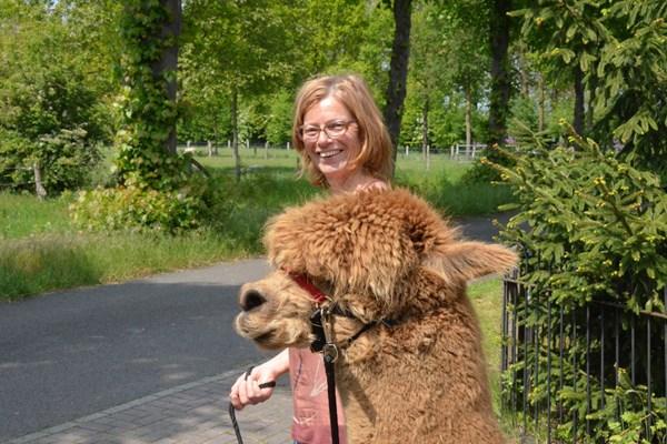 Wandeling alpaca