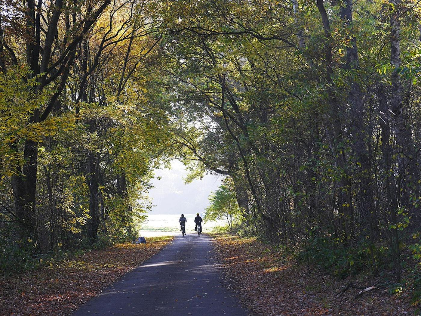 Twee fietsers in het bos
