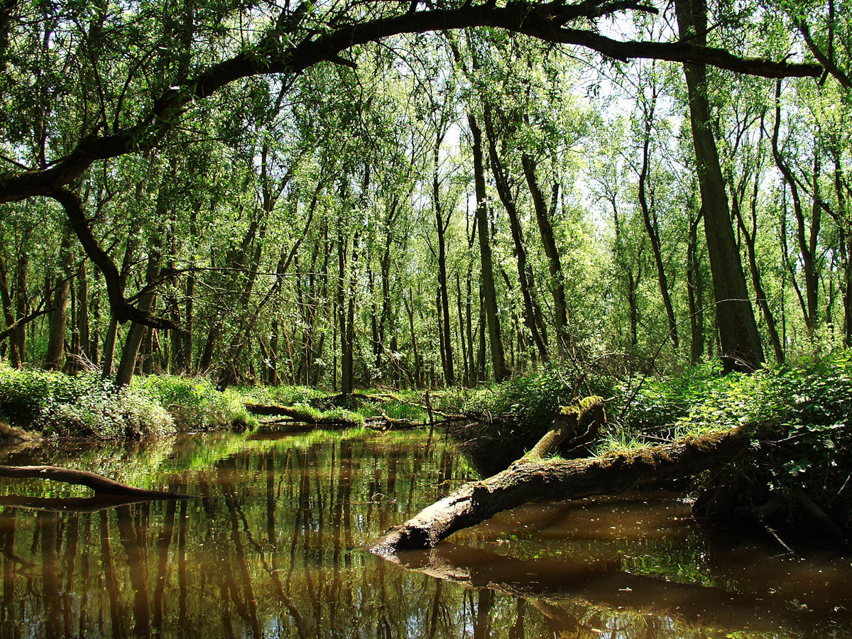 Natuurgebied de Biesbosch