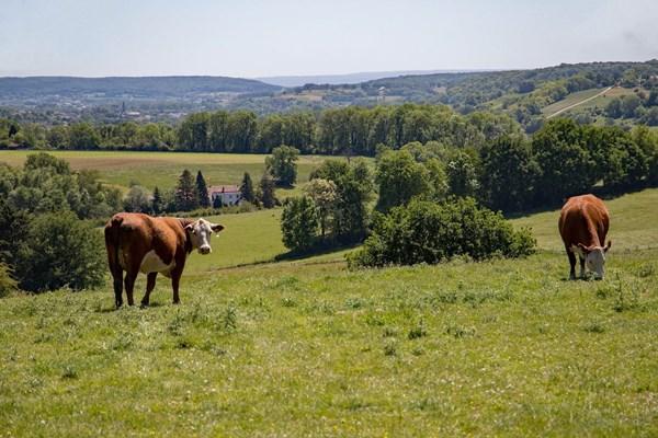 Uitzicht koeien in veld